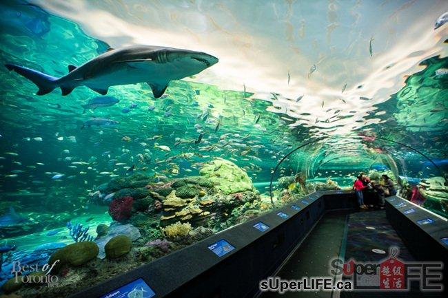 壁纸 海底 海底世界 海洋馆 水族馆 桌面 650_433