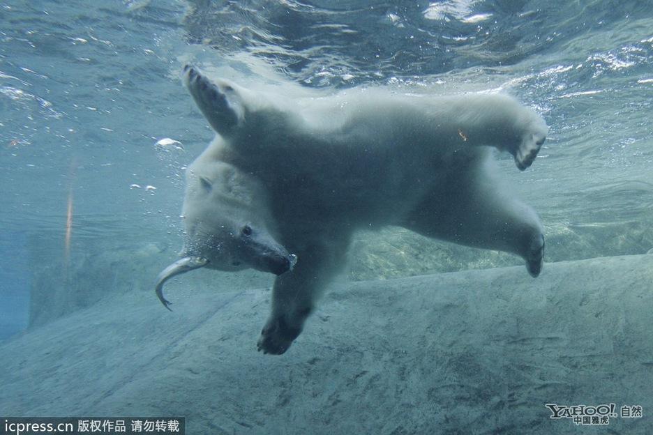 壁纸 动物 海洋动物 桌面 936_624