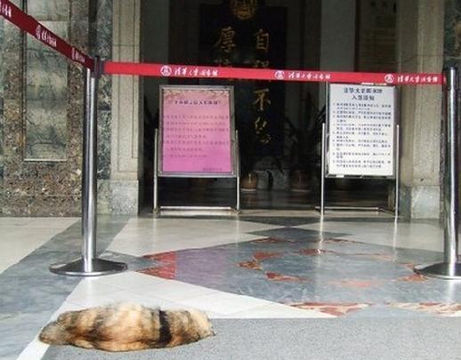 """虐猫惨案:清华""""喵馆长""""被开水烫死 学子愤慨(高清组图)"""