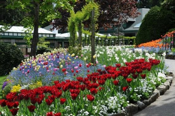 春天来了!维多利亚数花逾172亿花朵绽放