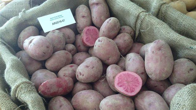 你确定这不是为情人节准备的?加国的粉红马铃薯