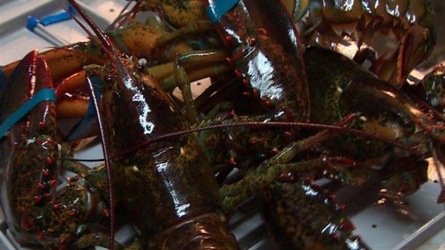 国际市场对加拿大活龙虾的需求猛增