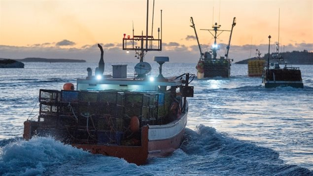 加拿大大西洋沿岸海域盛产龙虾