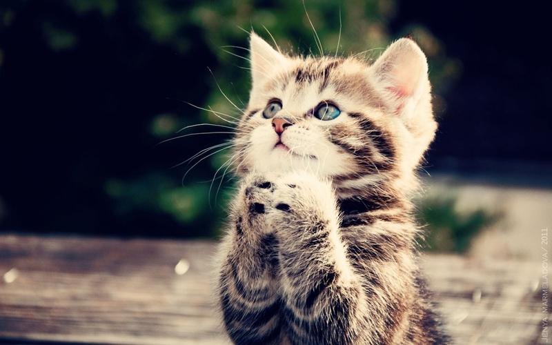 """""""猫咪""""的图片搜索结果"""