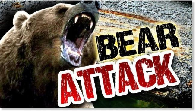bear_attack10.jpg