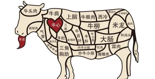 牛肉各部分分解图及做法,(家庭买牛肉小知识)