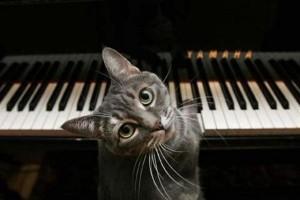 (影)史上第一只跟乐团合奏的猫咪钢琴手